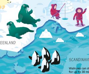 Children's Arctic and Antarctic Picture Map